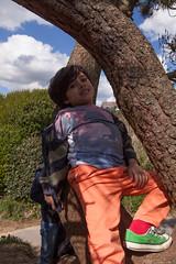 Sam Bournemouth-7.jpg (Reasonable Jim) Tags: bournemouth dante southbourne climbing tree treeclimbing