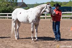 JBC_8206.jpg (Jim Babbage) Tags: krahc annualshow appaloosa horses