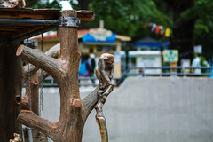 SDQH2604lr (yoshitoshi ABe) Tags: 20170514 吉祥寺 井の頭公園 sigma sigma85mmf14dghsmart016 sdquattroh サル