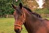 Trigger (Tony_Brasier) Tags: horse hot hut hill trees town fun fields farm ride flickr food faversham nikon 50mm d7200 dogs face kent