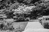 Spring-6 (FSR Photography) Tags: sw schwarzweis schwarzweiss bw blackandwhite blackwhite monochrome monochrom botanik bäume blumen canon canon400d canondslr frühling wege ways kontrast stones stairs treppen fsr fsrphotography