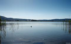 early summer (lichtauf35) Tags: bavaria landscape efs24stm pancake sl1 reflection kochelsee shorttrip outdoor bluesky lightroom acdsee derzeitaugenblickestehlen 1000views lichtauf35
