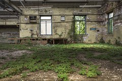 Creepin (Camera_Shy.) Tags: plants abandoned derelict abandonment mill old cotton textile nature growing indoors rotten disused urban decay industrial ue exploration tresspassing uk exploring industry machinery decayed urbex nikon decaying d810