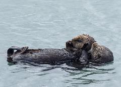Otter+Grooming