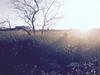 El almuerzo desnudo. (elojeador) Tags: arrabal hombre chico árbol arbusto matorral matojo mata edificio clínicamediterráneo sol luz rama resplandor burroughs williamburroughs droga campo momento instante quenoveo elojeador