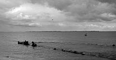 Sea Birds (Padmacara) Tags: australia fremantle g11 robbsjetty wyola sea ocean indianocean clouds gardenisland shipwreck statue cyoconnor bw monochrome bird