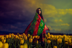 Whatever May Come (jajasgarden) Tags: tulips yellow flowers afghanistan