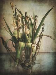 Pagan Prayer (Saritaku) Tags: bones tulips iphoneography iphone