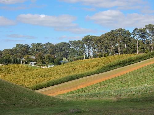 A Farmer's Fields