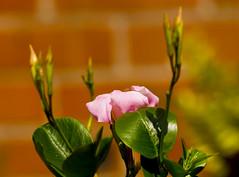 Flowers. (ost_jean) Tags: flowers bloemen fleurs nikon d5200 tamron sp 90mm f28 di vc usd macro 11 ostjean colors belgium belgica belgique belgie sundaville