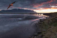 Flight of Icarus (Friðþjófur M.) Tags: skagafjordur skagafjörður friðþjófurm tindastóll canon5dmarkii canonef1740 seascape héraðsvötn sunset outdoor mountains colors water reflection sand blacksand clouds lights