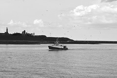 Fishing boat entering the Tyne with its Entourage. (Mark240590) Tags: