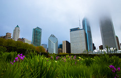 Chicago Nature (Darren LoPrinzi) Tags: 5d canon5d chicago urban canon chitown city miii cityscape skyline park millenniumpark flowers nature buildings skyscrapers fog sky clouds