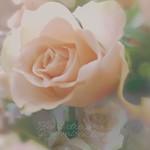 Plant dreams , grow miracles thumbnail