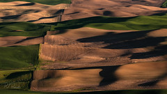 Palouse Color IV (PJ Resnick) Tags: 2017 pjresnick palousewa perryjresnick pjresnickgmailcom pjresnickphotographygmailcom ©2017pjresnick ©pjresnick nature light fuji fujifilm atmosphere atmospheric digital shadow texture shadows yellow angle perspective naturallight xf fujinon resnick outdoor green brown orange rectangle rectangular color colour sky xpro2 fujifilmxpro2 landscape washington filmsimulation fujinon55200mm 55200mm 16x9 sunset evening sundown