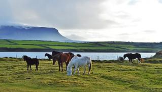 Ireland's coast.