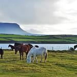 Ireland's coast. thumbnail