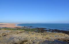 Rocky Island low tide view (DavidWF2009) Tags: northumberland seatonsluice lowtide rocks sea beach rockyisland