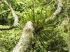 Jungle (Alveart) Tags: amazonas2 amazonas selva jungle southamerica amazonbasin theamazon suramerica latinamerica latinoamerica alveart luisalveart tanimbocaamazonas2