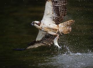 Fishing Master...