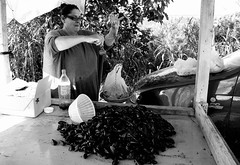 Maria, la cozzara di Vallevò (rossolev) Tags: vallevò roccasangiovanni costadeitrabocchi abruzzo italia cozze crozzaèunoscemo beppegrillononvaleuncazzoepuredimaioedibattista adriatico mare fruttidimare moules estate sole costa stradastatale16