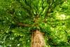 Masmoutiers - Nature - (Noir et Blanc 19) Tags: nature fleur arbre marronnier sony a77