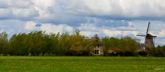 Dutch Landscape (JaapCom) Tags: jaapcom landscape landed flowers mill moulin trees natural natuur clouds dutchnetherlands holland zalk