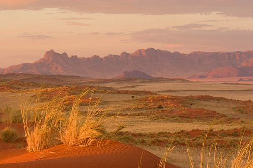 Red Dunes and Dune Grass , at  WOLWEDANS, NamibRand, Southern Namibia,