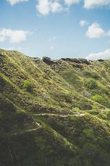 Surrounded by Nature 3 (Kou Thao) Tags: animals nature wildlife hawaii scenery photograhy kokohead adventure vintage vibes tropical airplane sky sunset clouds traveler luau horse jungle