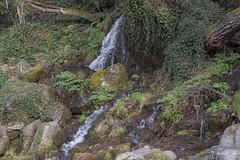 Pura naturaleza (pedroramfra91) Tags: naturaleza nature agua water primavera spring arbol tree