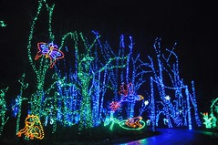 16 Trees, Frogs & Butterflies (megatti) Tags: buckscounty butterflies christmas christmaslights pa pennsylvania shadybrookfarm trees yardley