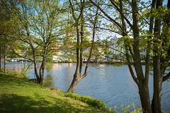 Traveufer (frank-hl) Tags: 35mm altstadt bäume flus lübeck trave wasser schleswigholstein