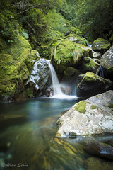 Cascada Parque Alerce Andino (AllanS.) Tags: waterfall cascada alerce andino parque park national nature bosque chile south america sur water long exposure nikon d5200 greenworld
