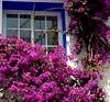 Buganvilla en la ventana (camus agp) Tags: ventanas buganvillas bougainvilleas colores fachadas