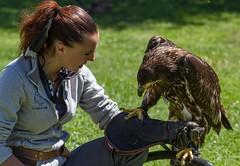 Amis (friends) (Larch) Tags: aigle eagle apprivoisé tamed oiseau bird spectacle show lesaiglesduléman amis friends gant glove dresseuse portrait rapace fll l femme woman