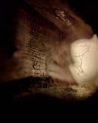 $2.66 Macro Lens (dsgetch) Tags: searoseguesthouse searose sierralupeconstruction cheaplens cliponphonelens cliponlens nexus5 macro knothole spiderweb web spider cave