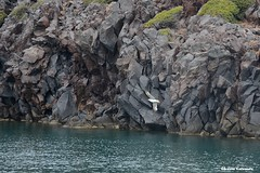 Cruise on the coast of Santorini (Eleanna Kounoupa) Tags: ελλάδα νησιάαιγαίου κυκλάδεσ σαντορίνη νησί θάλασσα κρουαζιέρα greece aegeanislands kiklades santorini island sea cruise βράχια γλάροι rocks seagulls seascape θαλασσινότοπίο