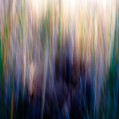 Marshland Grasses 049 (noahbw) Tags: d5000 icm nikon prairiewolfsloughforestpreserve abstract autumn blur grass intentionalcameramovement marshland motion movement natural noahbw prairie square wetlands marshlandgrasses