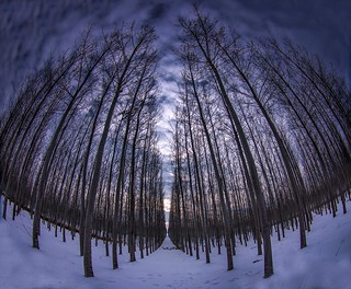 Boardman Tree Farm in the winter