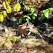 Acadia National Park (hannah ellingwood) Tags: fox kit baby animal wildlife