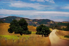 Country Roads, Take Me Home (Christina's World aka Chrissie Bee) Tags: landscape road trees hills country sandiego unitedstates painterly textures scenic home