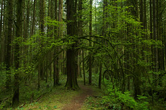 Unmarked Trail (Kristian Francke) Tags: outdoors nature forest trail path tree trees green spring summer woods woodland bc canada british columbia metro vancouver pentax