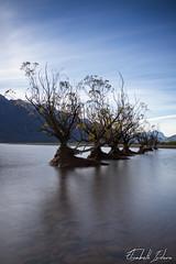 Old Willows (Velvet.R) Tags: 1020mm 7d canon eos elisabethisidoro filtre glenorchy nd128 nd400 newzealand nisi nouvellezélande otago sigma southisland velvetroses iledusud