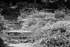 Spring-7 (FSR Photography) Tags: sw schwarzweis schwarzweiss bw blackandwhite blackwhite monochrome monochrom botanik bäume blumen canon canon400d canondslr frühling wege ways kontrast stones stairs treppen fsr fsrphotography