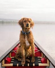 Happy Friday! • • • • • #campingwithdogs #hikingwithdogs #dogsonadventures #dogsthathike #adventuredog #thestatelyhound #houndandlife #backcountrypaws #doglove #hikingdogsofinstagram #excellent_dogs #adventureswithdogs #topdogphoto #heelergram #hikingdog (watson_the_adventure_dog) Tags: happy friday • campingwithdogs hikingwithdogs dogsonadventures dogsthathike adventuredog thestatelyhound houndandlife backcountrypaws doglove hikingdogsofinstagram excellentdogs adventureswithdogs topdogphoto heelergram hikingdog animaladdicts traildog irishdaily bestwoof hikingcollective pawsitiveliving wanderireland instaireland inspireland irishpassion irelandgram campingculture hikingtheglobe