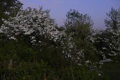 SPC_2301 (seansverige) Tags: moonlight naturallightphotography nocturnalphotography longexposure