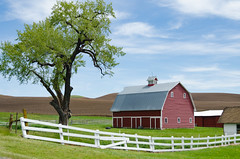 Red Barn (Kelly Renée) Tags: palouse usa washington afternoon barn color daytime farrm fence field hills picketfence tree