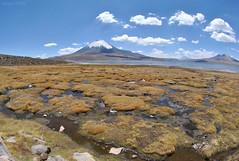 Lago Chungará y Volcán Parinacota (Javiera C) Tags: chile arica parinacota landscape paisaje naturaleza nature nationalpark parquenacional montaña mountain lago lake chungará lagochungará volcán volcano altiplano highlands lauca