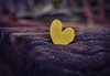 unbalanced heart (Leitratista) Tags: composition explore throughherlens focus dofart dof shape color yellow nikond3400 nikonhunt nikoncapture nikon kitlensmacro kitlens love lovephotography lowangle photography photoassignments constractivecriticism mood drama art visualart