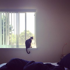 Wondering the world out of window (jaffera) Tags: instagramapp square squareformat iphoneography uploaded:by=instagram amaro instacat babycat kitten catlover caturday cat catoftheday catsofinstagram window california